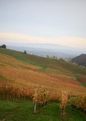 Jesen-med-vinogradi-Bizeljsko-2020-56