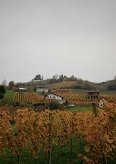 Jesen-med-vinogradi-Bizeljsko-2020-58
