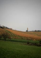 Jesen-med-vinogradi-Bizeljsko-2020-59