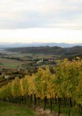 Jesen-med-vinogradi-Bizeljsko-2020-6