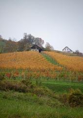 Jesen-med-vinogradi-Bizeljsko-2020-60
