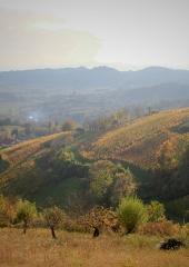 Jesen-med-vinogradi-Bizeljsko-2020-62