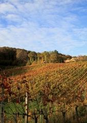 Jesen-med-vinogradi-Bizeljsko-2020-63