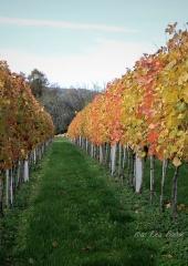 Jesen-med-vinogradi-Bizeljsko-2020-65