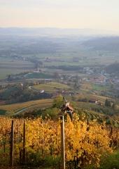Jesen-med-vinogradi-Bizeljsko-2020-66