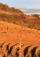 Jesen-med-vinogradi-Bizeljsko-2020-68