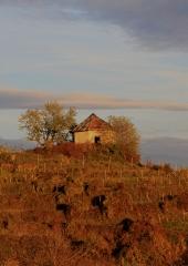 Jesen-med-vinogradi-Bizeljsko-2020-69
