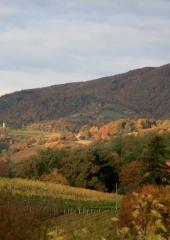Jesen-med-vinogradi-Bizeljsko-2020-7