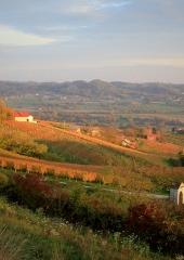 Jesen-med-vinogradi-Bizeljsko-2020-71