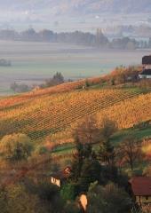 Jesen-med-vinogradi-Bizeljsko-2020-72
