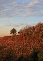 Jesen-med-vinogradi-Bizeljsko-2020-73