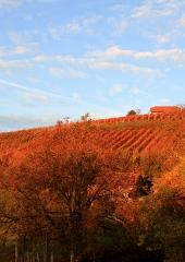 Jesen-med-vinogradi-Bizeljsko-2020-74