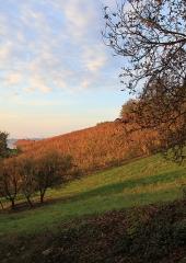 Jesen-med-vinogradi-Bizeljsko-2020-75