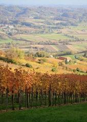 Jesen-med-vinogradi-Bizeljsko-2020-77