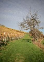 Jesen-med-vinogradi-Bizeljsko-2020-78
