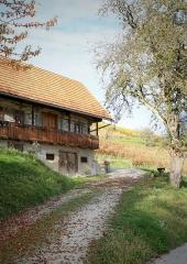 Jesen-med-vinogradi-Bizeljsko-2020-79