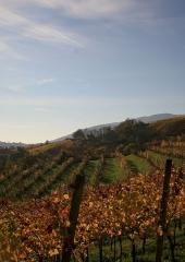 Jesen-med-vinogradi-Bizeljsko-2020-81