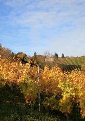 Jesen-med-vinogradi-Bizeljsko-2020-82