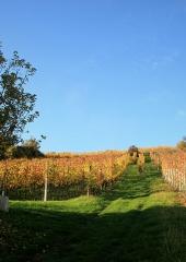 Jesen-med-vinogradi-Bizeljsko-2020-83