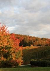 Jesen-med-vinogradi-Bizeljsko-2020-9