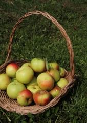 Jabolka-2