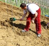 April ročno sajenje vinske trte (13)
