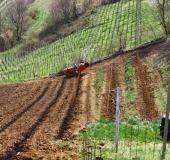 April ročno sajenje vinske trte (20)
