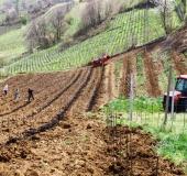 April ročno sajenje vinske trte (21)