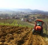 April ročno sajenje vinske trte (7)
