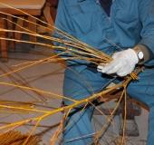 Januar obrezovanje bekove trtice (2)