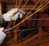 Januar obrezovanje bekove trtice (6)