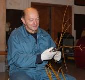 Januar obrezovanje bekove trtice (8)