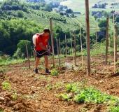 Vinogradništvo skozi leto - maj (1)