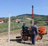 Vinogradništvo skozi leto - maj (4)