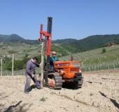 Vinogradništvo skozi leto - maj (5)