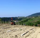Vinogradništvo skozi leto - maj (9)
