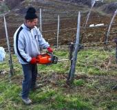 Marec vezanje vinske trte (8)