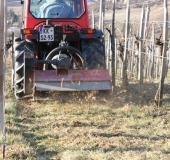 Marec vezanje vinske trte (30)