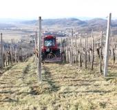 Marec vezanje vinske trte (31)