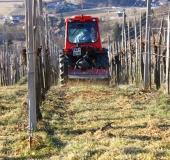 Marec vezanje vinske trte (34)