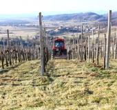 Marec vezanje vinske trte (35)